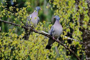 lovebirds-774292_960_720